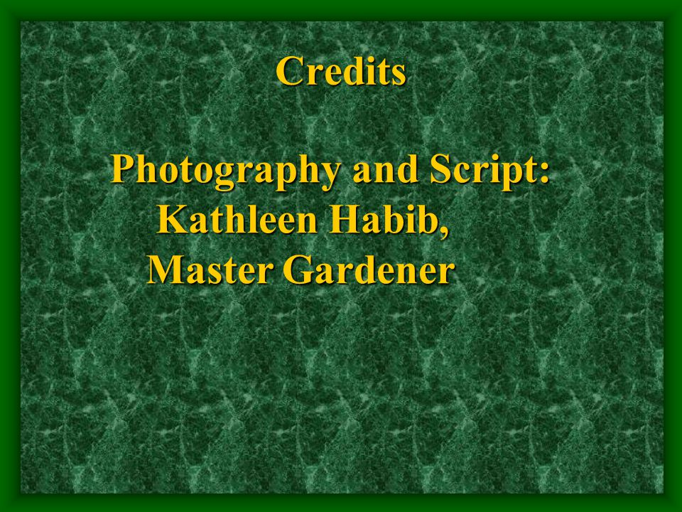 Credits Photography and Script: Photography and Script: Kathleen Habib, Kathleen Habib, Master Gardener Master Gardener