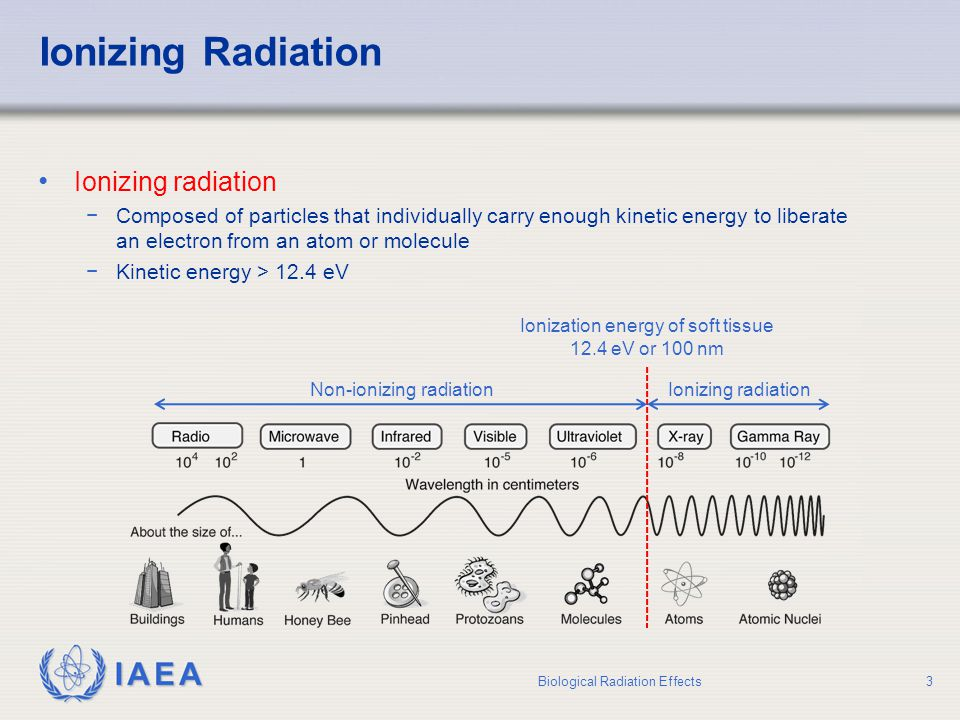 IAEA Discovery of Ionizing Radiation X-rays (1895)Natural radioactivity (1896) Wilhelm Conrad Roentgen Antoine Henri Becquerel Nobel Prize in Physics 1901Nobel Prize in Physics 1903 Biological Radiation Effects4