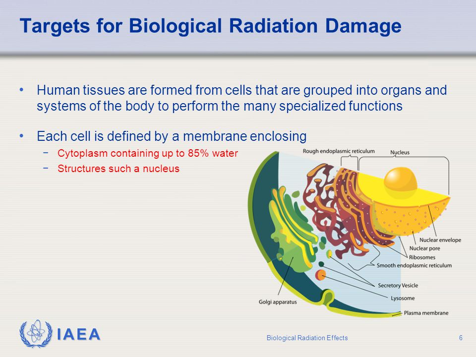 IAEA Stochastic Radiation Effects Principal sources of information on stochastic effects are −Epidemiological studies on atomic-bomb survivors −Patients exposed to radiation for medical treatment or diagnosis −Some groups of occupationally exposed workers (uranium miners, nuclear industry workers, radium-dial painters) Biological Radiation Effects17