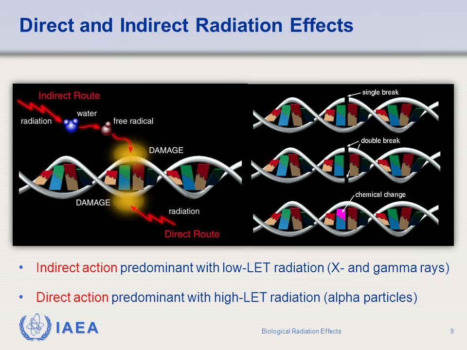 IAEA Consequences of DNA Damage Biological Radiation Effects10 DNA damage MutationCell deathRepair Stochastic effectDeterministic effectViable cell