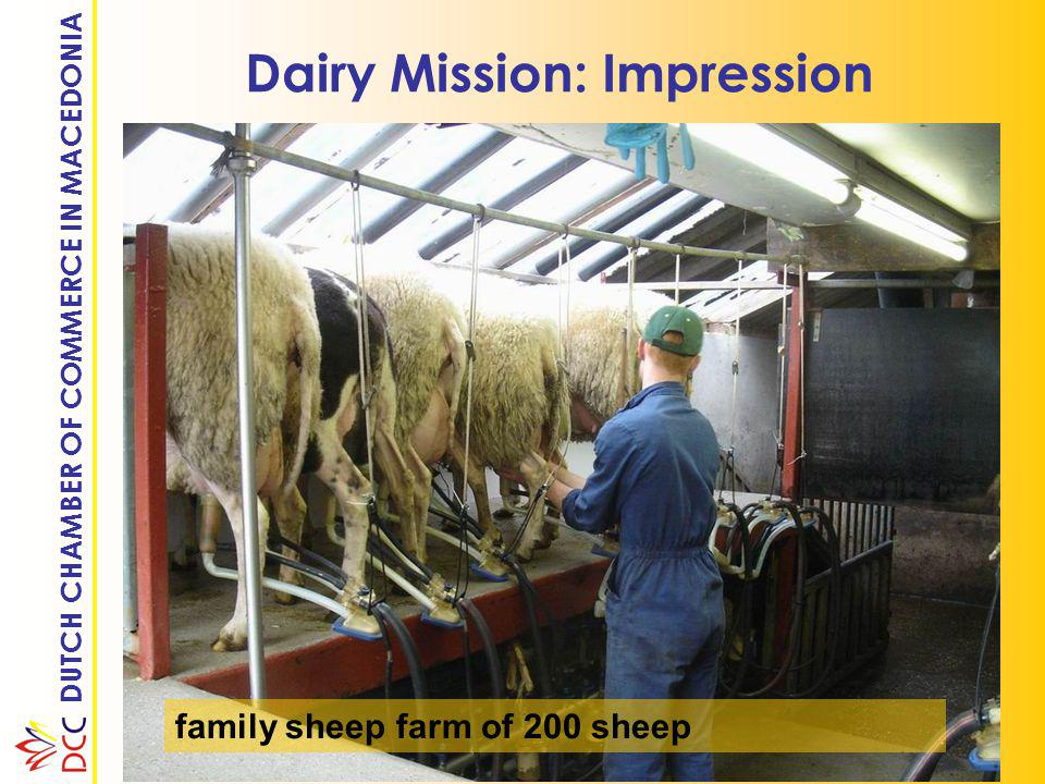 DUTCH CHAMBER OF COMMERCE IN MACEDONIA Dairy Mission: Impression family sheep farm of 200 sheep