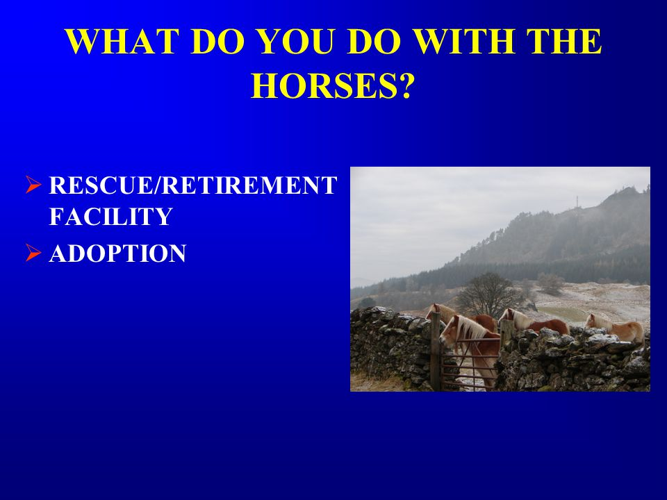 WHAT DO YOU DO WITH THE HORSES  RESCUE/RETIREMENT FACILITY  ADOPTION