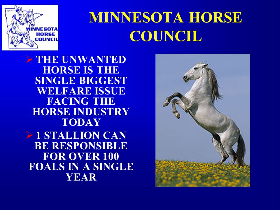 MINNESOTA HORSE COUNCIL  THE UNWANTED HORSE IS THE SINGLE BIGGEST WELFARE ISSUE FACING THE HORSE INDUSTRY TODAY  1 STALLION CAN BE RESPONSIBLE FOR OVER 100 FOALS IN A SINGLE YEAR