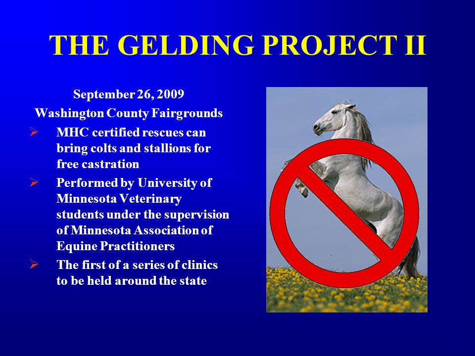 THE GELDING PROJECT II September 26, 2009 Washington County Fairgrounds  MHC certified rescues can bring colts and stallions for free castration  Performed by University of Minnesota Veterinary students under the supervision of Minnesota Association of Equine Practitioners  The first of a series of clinics to be held around the state