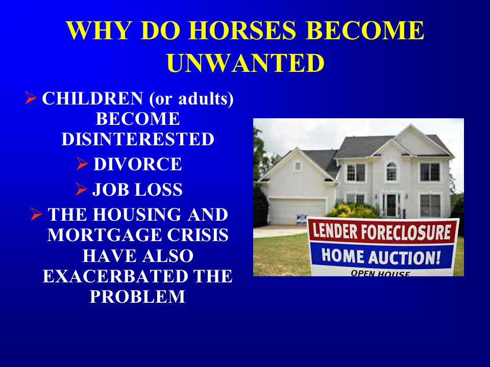 WHY DO HORSES BECOME UNWANTED  CHILDREN (or adults) BECOME DISINTERESTED  DIVORCE  JOB LOSS  THE HOUSING AND MORTGAGE CRISIS HAVE ALSO EXACERBATED THE PROBLEM
