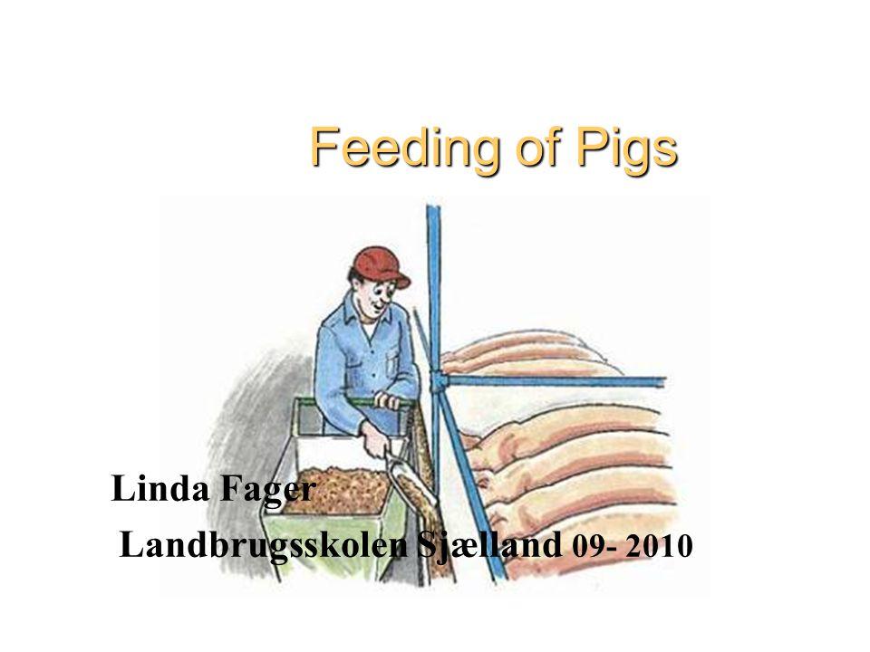 1 Feeding of Pigs Linda Fager Landbrugsskolen Sjælland 09- 2010