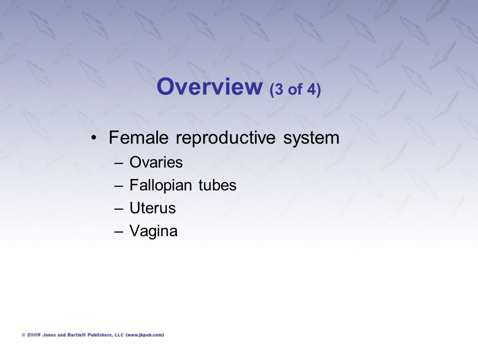 Female Problems (10 of 26) Missed menses –Temporary absence of menstrual periods is not necessarily abnormal.