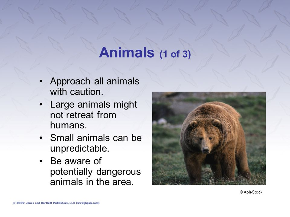 Animals (1 of 3) Approach all animals with caution. Large animals might not retreat from humans. Small animals can be unpredictable. Be aware of poten
