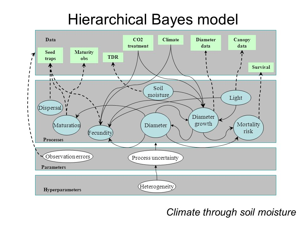 TDR Maturity obs Data Processes Parameters Hyperparameters CO2 treatment Seed traps ClimateDiameter data Survival Dispersal Maturation Fecundity Diameter growth Mortality risk Observation errors Process uncertainty Heterogeneity Light Canopy data Soil moisture Diameter Climate through soil moisture Hierarchical Bayes model