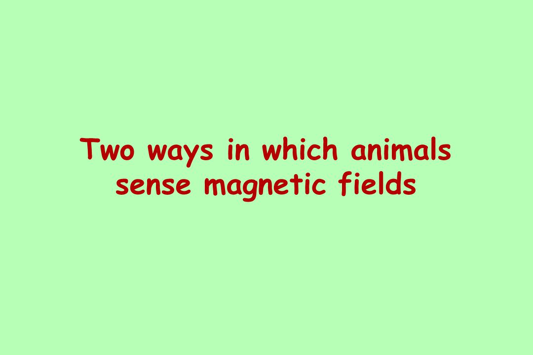 Two ways in which animals sense magnetic fields
