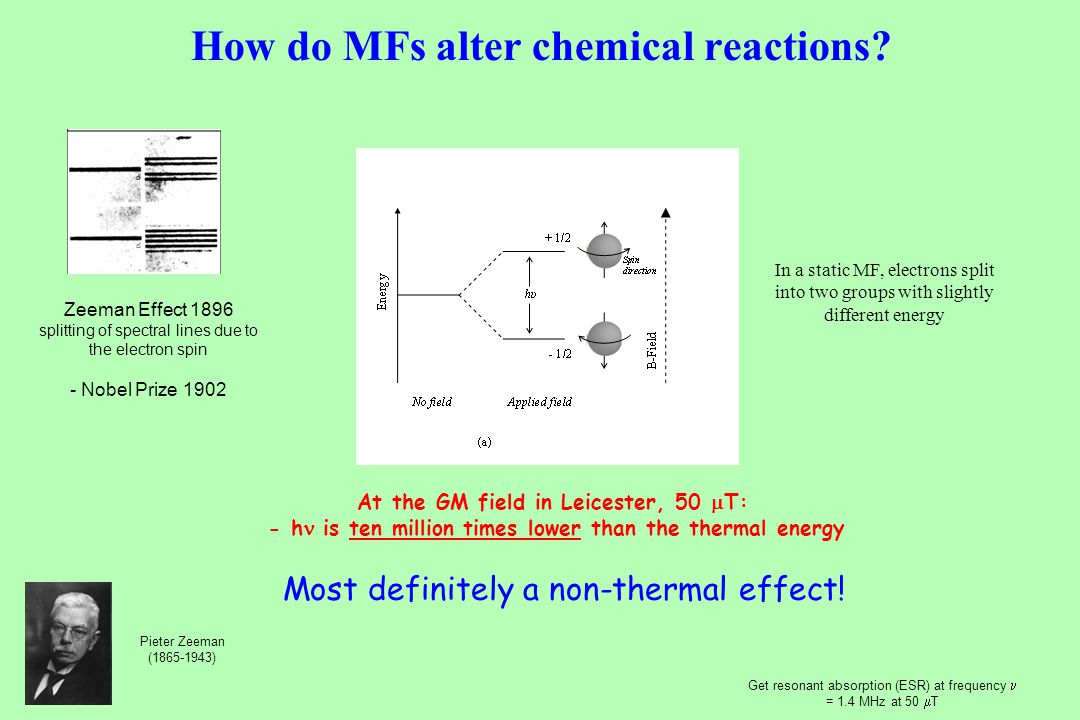 How do MFs alter chemical reactions.