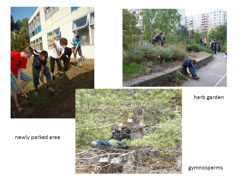 herb garden gymnosperms newly parked area