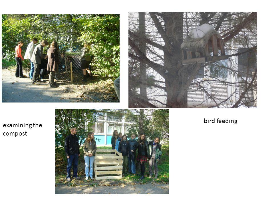 examining the compost bird feeding