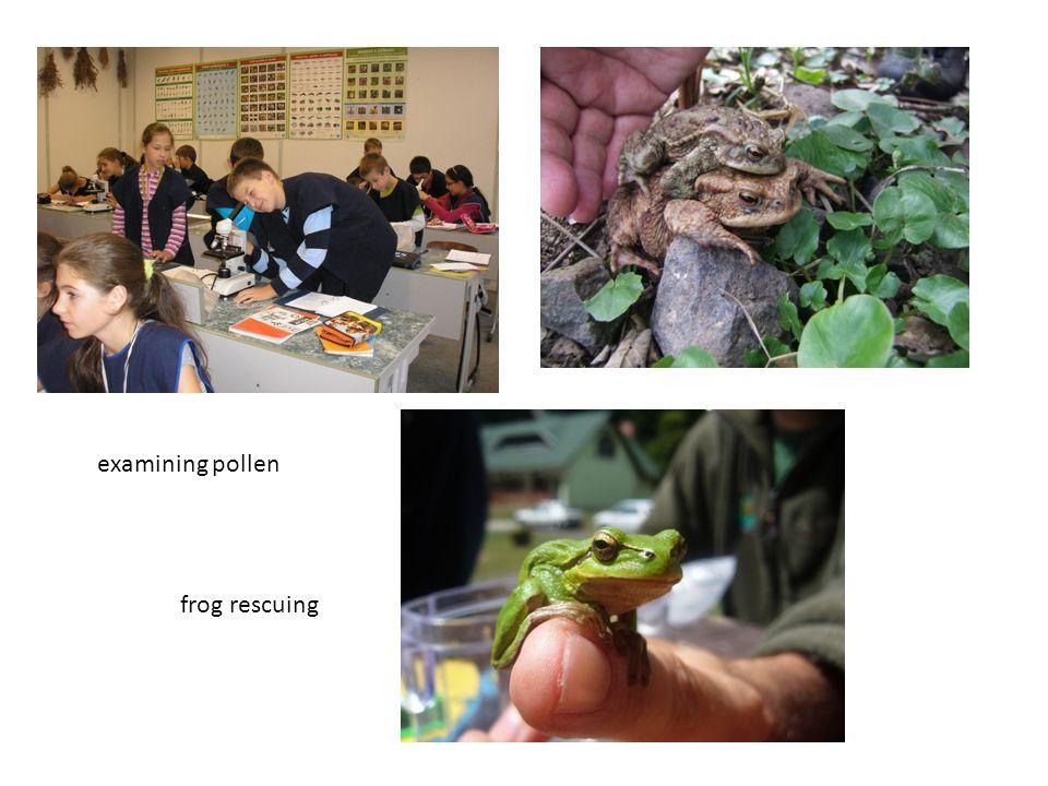 examining pollen frog rescuing