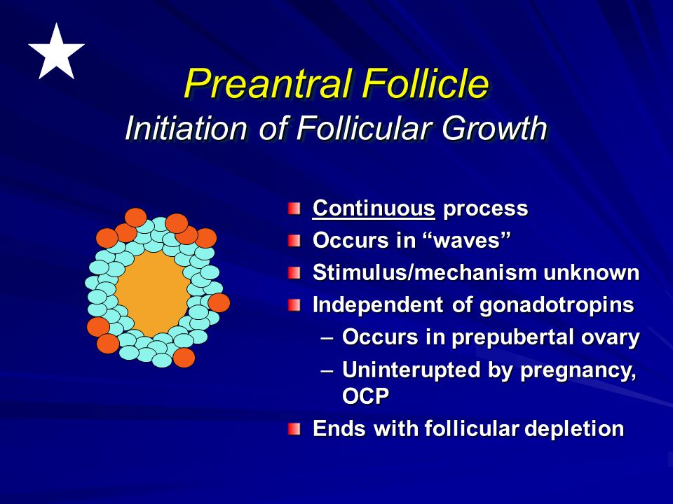 """Continuous process Occurs in """"waves"""" Stimulus/mechanism unknown Independent of gonadotropins –Occurs in prepubertal ovary –Uninterupted by pregnancy,"""
