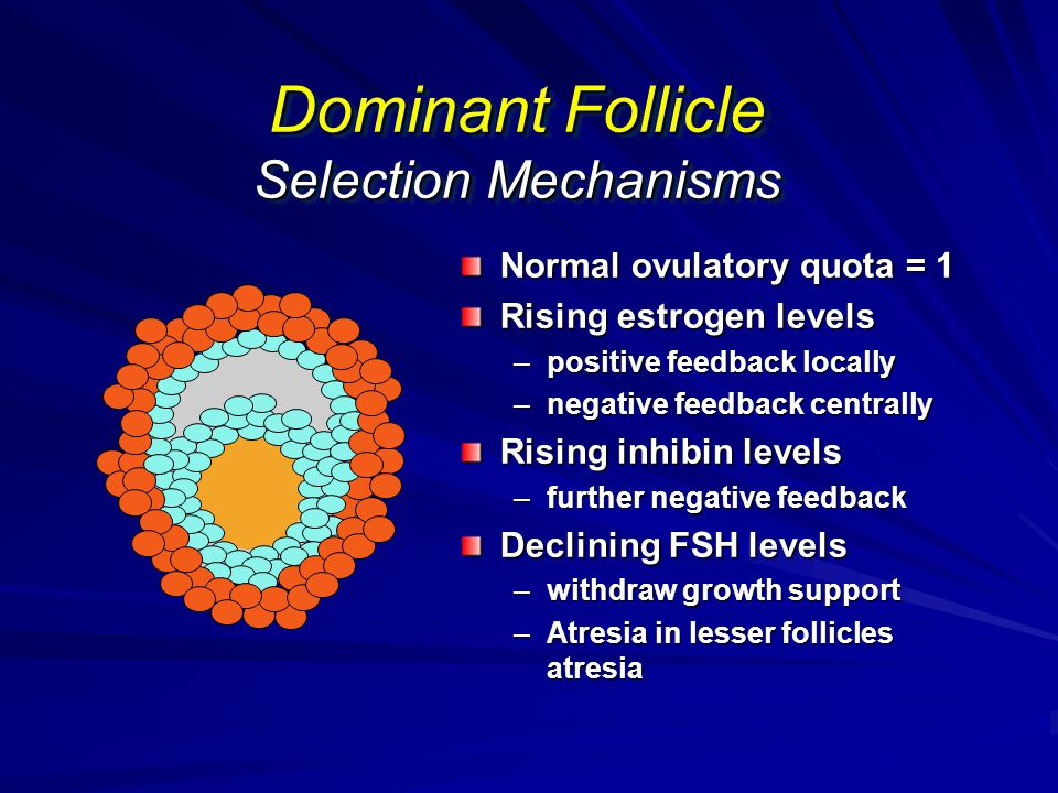 Dominant Follicle Selection Mechanisms Normal ovulatory quota = 1 Rising estrogen levels –positive feedback locally –negative feedback centrally Risin