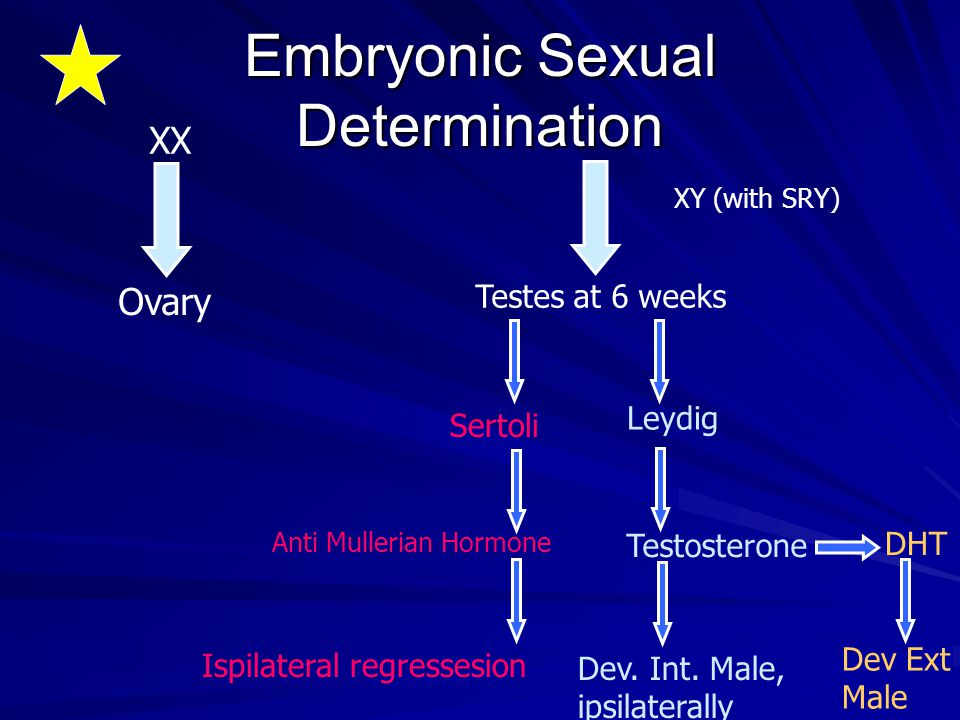 Embryonic Sexual Determination XX XY (with SRY) Ovary Testes at 6 weeks Sertoli Leydig Anti Mullerian Hormone Testosterone DHT Dev Ext Male Ispilatera