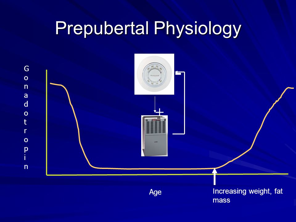 Age GonadotropinGonadotropin Prepubertal Physiology + - Increasing weight, fat mass