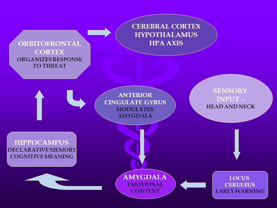 SENSORY INPUT – HEAD AND NECK AMYGDALA EMOTIONAL CONTENT ANTERIOR CINGULATE GYRUS MODULATES AMYGDALA CEREBRAL CORTEX HYPOTHALAMUS HPA AXIS HIPPOCAMPUS DECLARATIVE MEMORY COGNITIVE MEANING ORBITOFRONTAL CORTEX ORGANIZES RESPONSE TO THREAT LOCUS CERULEUS EARLY WARNING