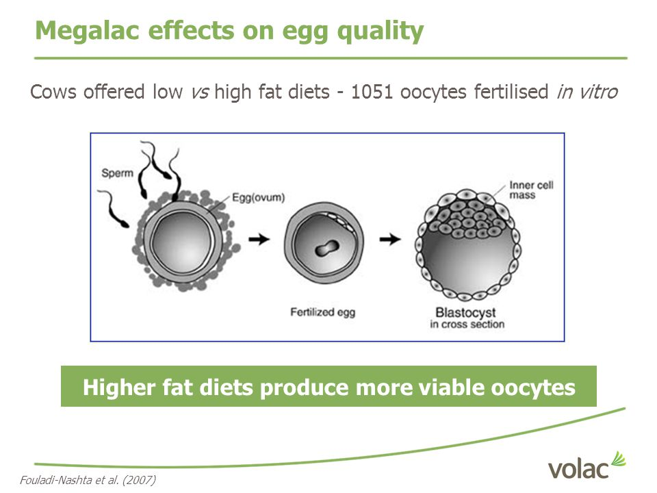 Higher fat diets produce more viable oocytes Fouladi-Nashta et al. (2007) Cows offered low vs high fat diets - 1051 oocytes fertilised in vitro Megala