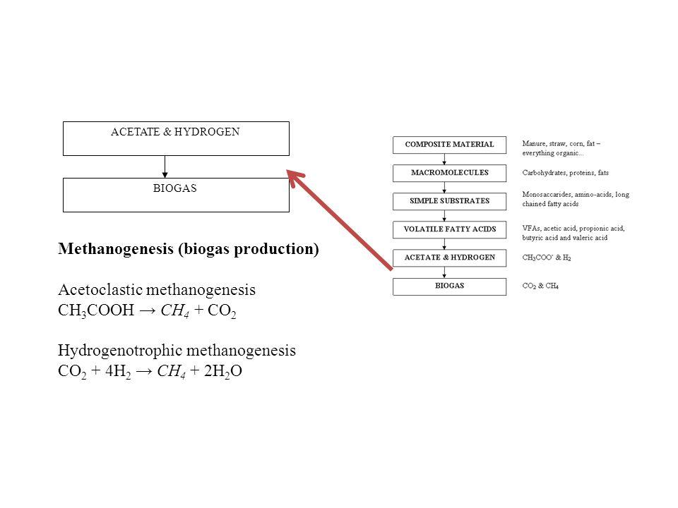 ACETATE & HYDROGEN BIOGAS Methanogenesis (biogas production) Acetoclastic methanogenesis CH 3 COOH → CH 4 + CO 2 Hydrogenotrophic methanogenesis CO 2