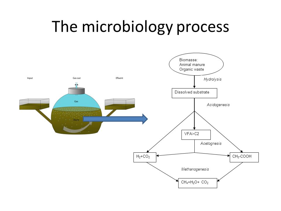 The microbiology process Biomasse: Animal manure Organic waste Hydrolysis Dissolved substrate Acidogenesis H 2 +CO 2 Acetognesis VFA>C2 CH 4 +H 2 O+ C