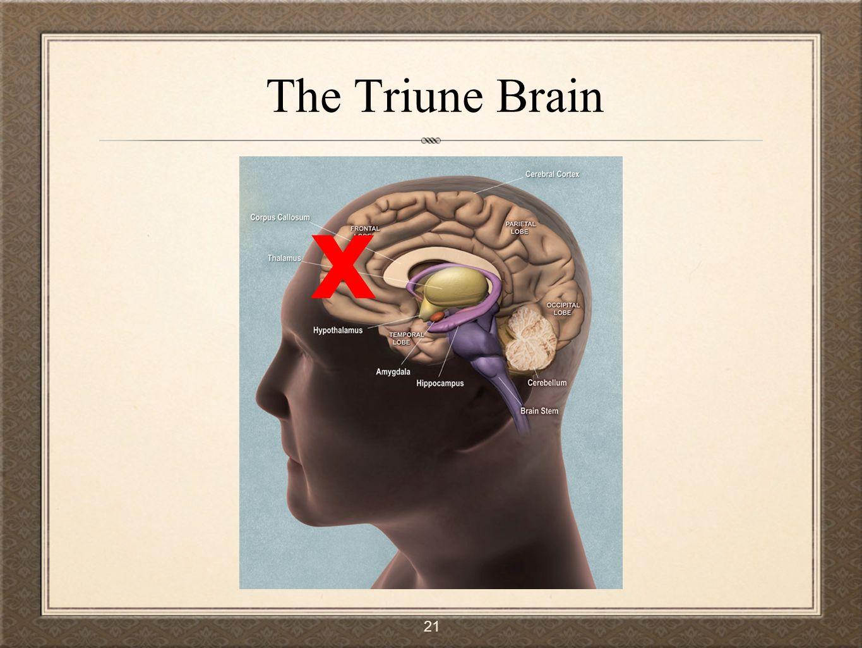 21 The Triune Brain x