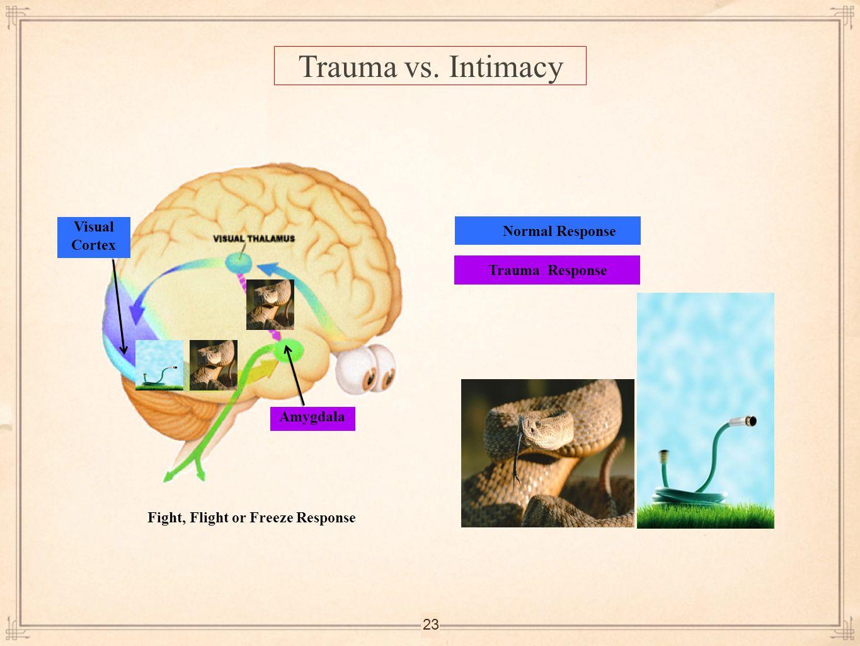 23 Normal ResponseTrauma Response Amygdala Fight, Flight or Freeze Response Visual Cortex Trauma vs. Intimacy