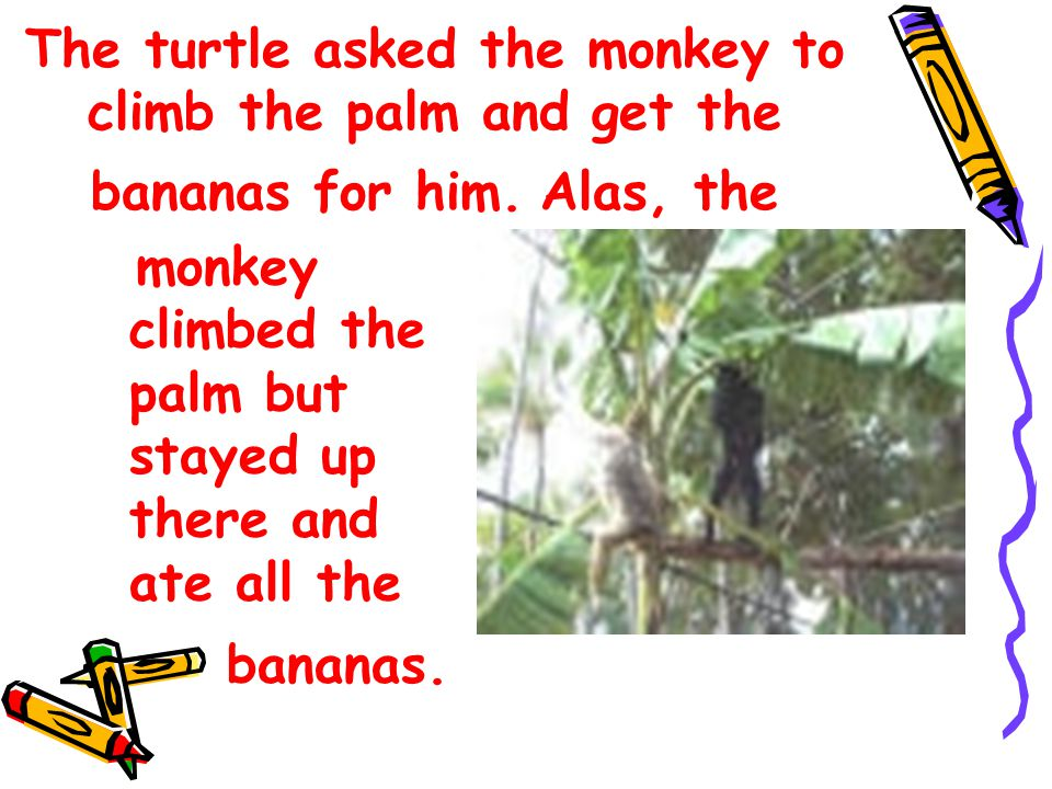 The turtle asked the monkey to climb the palm and get the bananas for him.