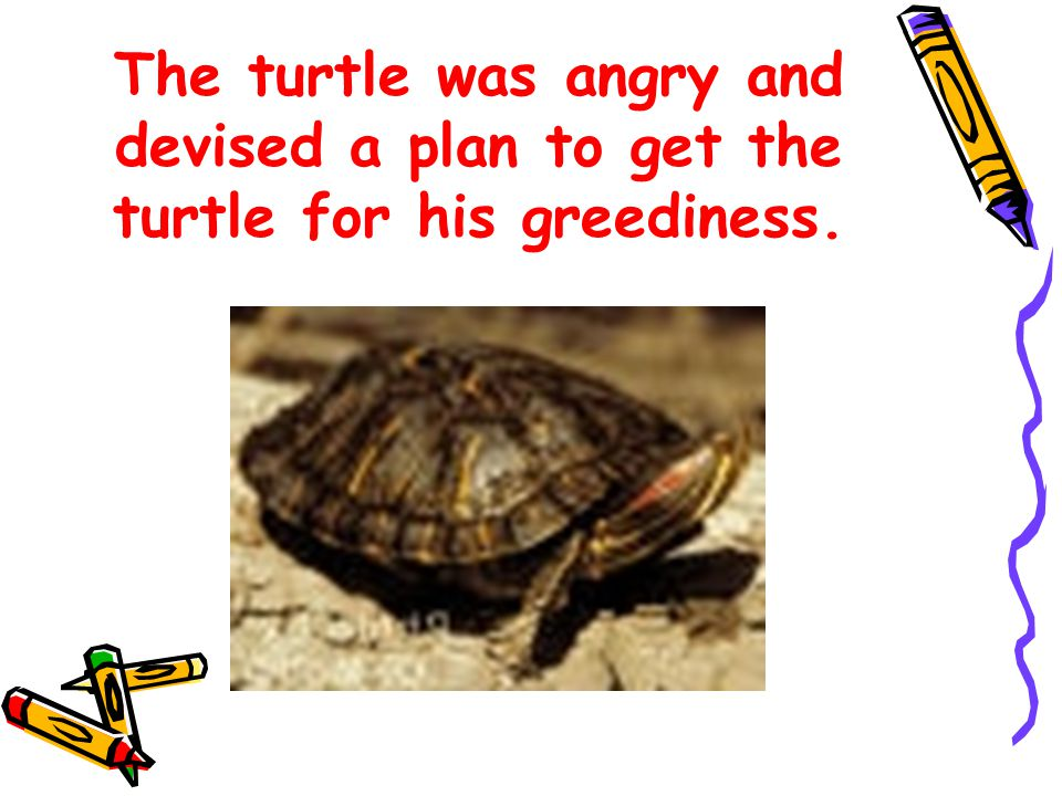 The turtle was angry and devised a plan to get the turtle for his greediness.