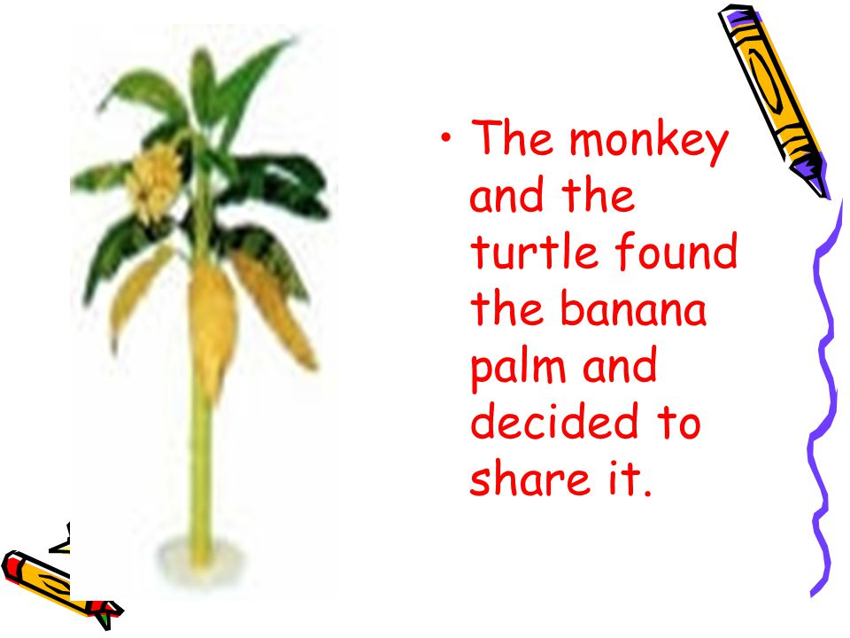The monkey and the turtle found the banana palm and decided to share it.