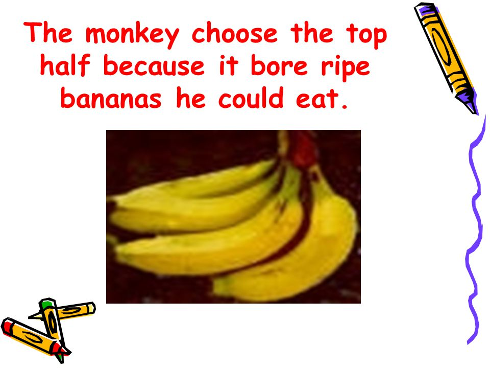 The monkey choose the top half because it bore ripe bananas he could eat.