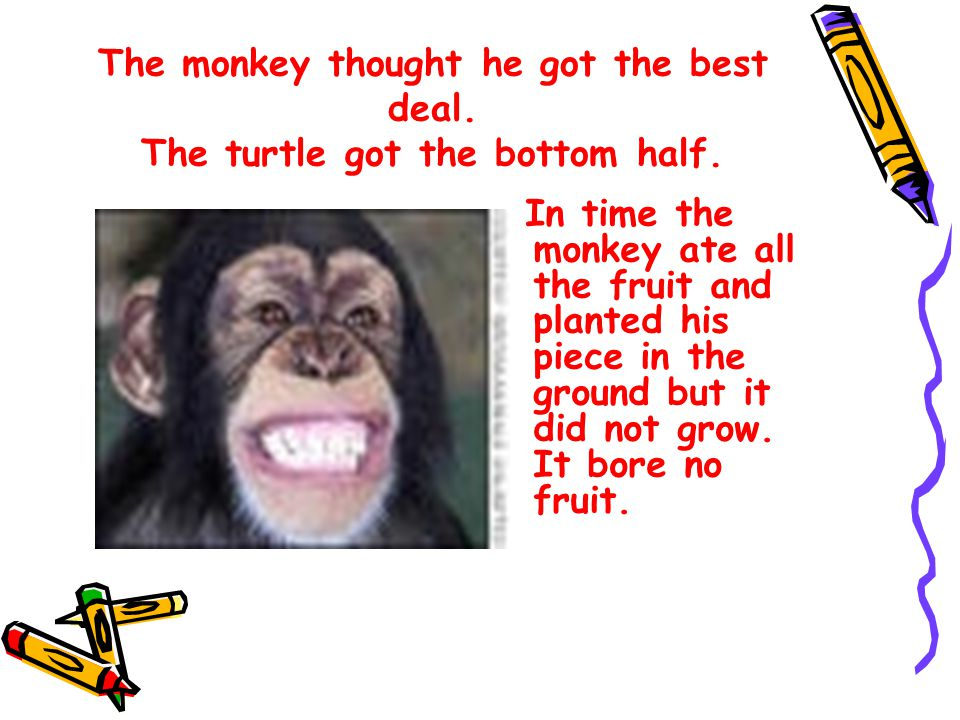 The monkey thought he got the best deal. The turtle got the bottom half.