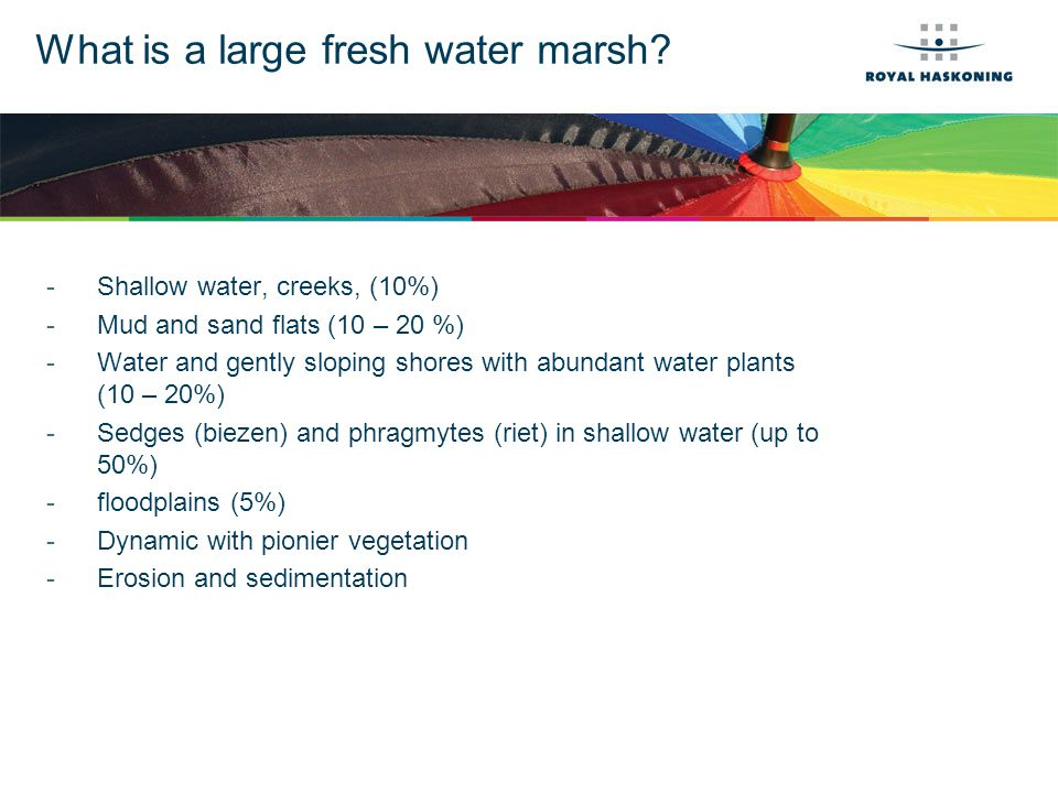 What is a large fresh water swamp?