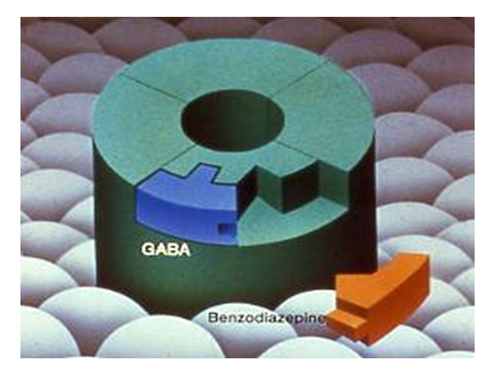 CHLORIDE ION CHANNELS: GABA/BENZO RECEPTORS