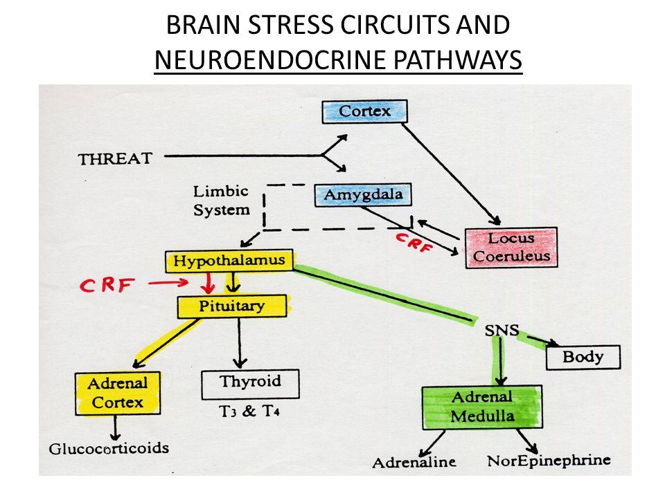 BRAIN STRESS CIRCUITS AND NEUROENDOCRINE PATHWAYS