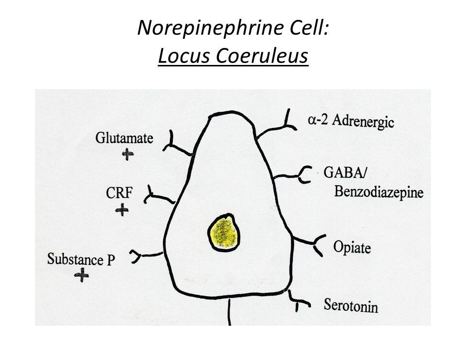 Norepinephrine Cell: Locus Coeruleus