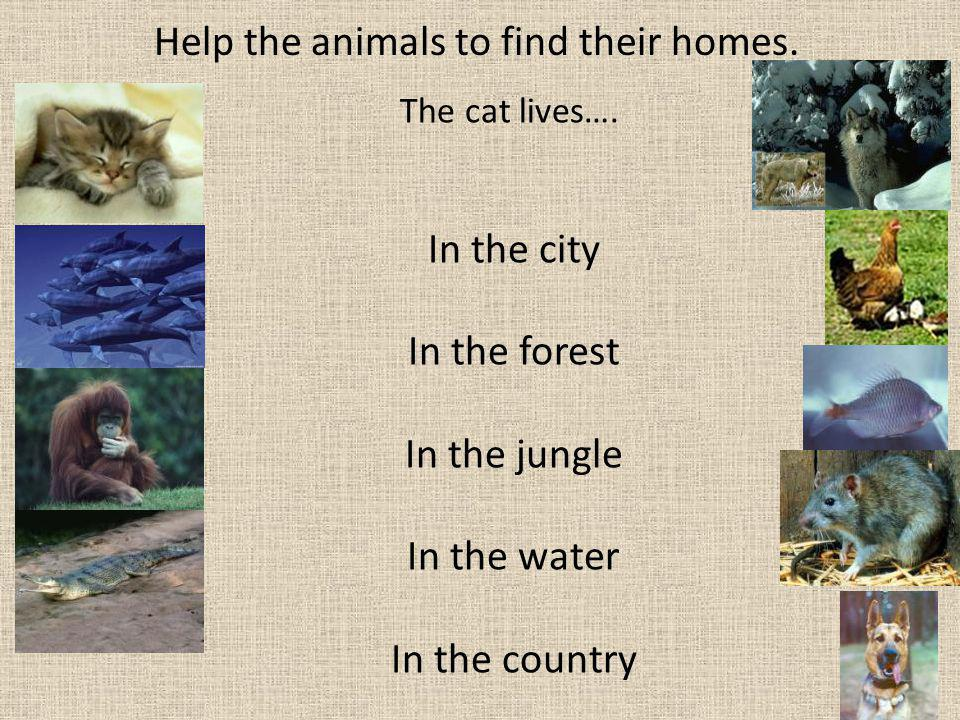 Help the animals to find their homes.