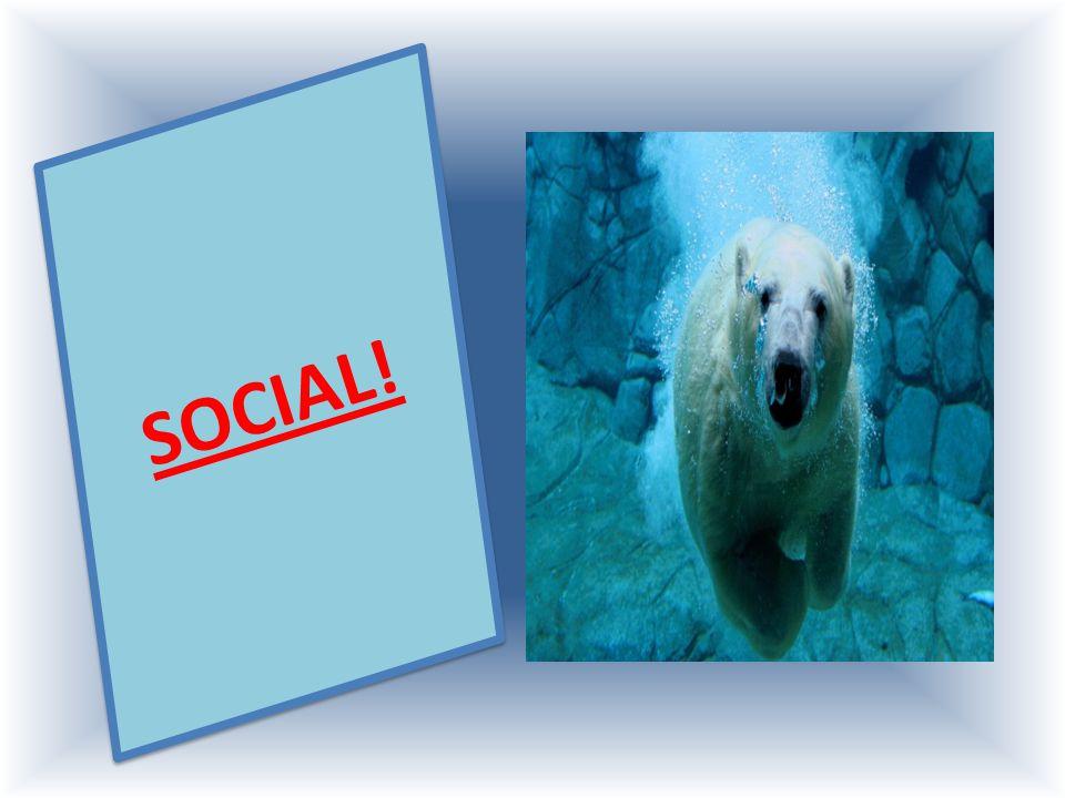 SOCIAL!