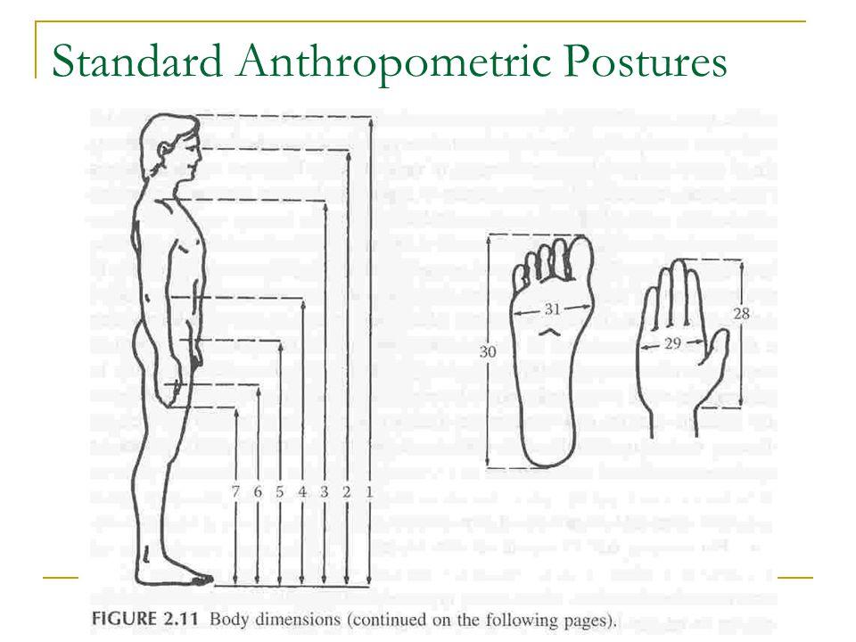 Standard Anthropometric Postures