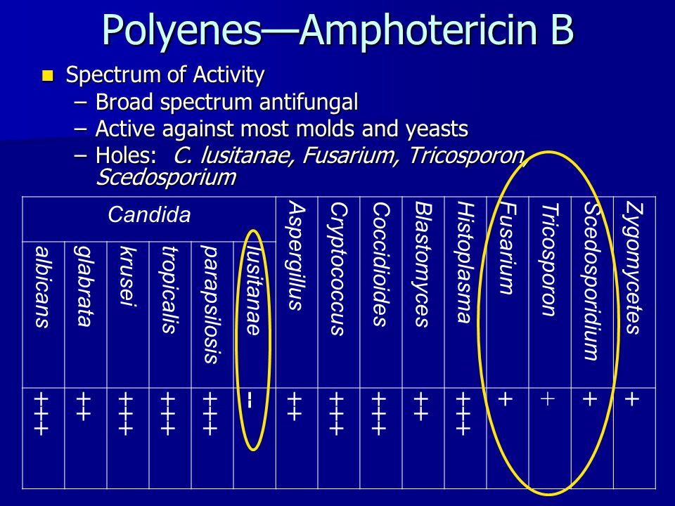 Polyenes—Amphotericin B Resistance Resistance –Susceptibility testing methods have not been standardized –Development of resistance in a previously susceptible species is uncommon –Mechanisms of Resistance  Reductions in ergosterol biosynthesis  Synthesis of alternative sterols that lessen the ability of amphotericin B to interact with the fungal membrane