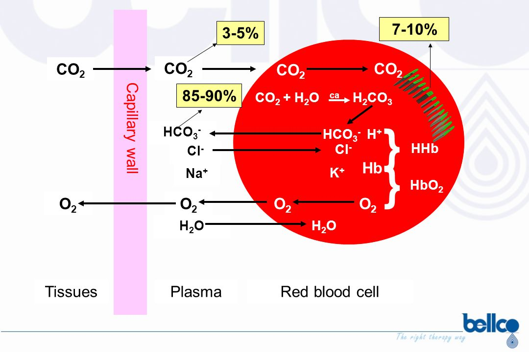Cl - TissuesPlasmaRed blood cell Capillary wall CO 2 O2O2 O2O2 HCO 3 - Cl - Na + H2OH2O CO 2 + H 2 O ca H 2 CO 3 HCO 3 - H + K+K+ H2OH2O O2O2 } Hb } H