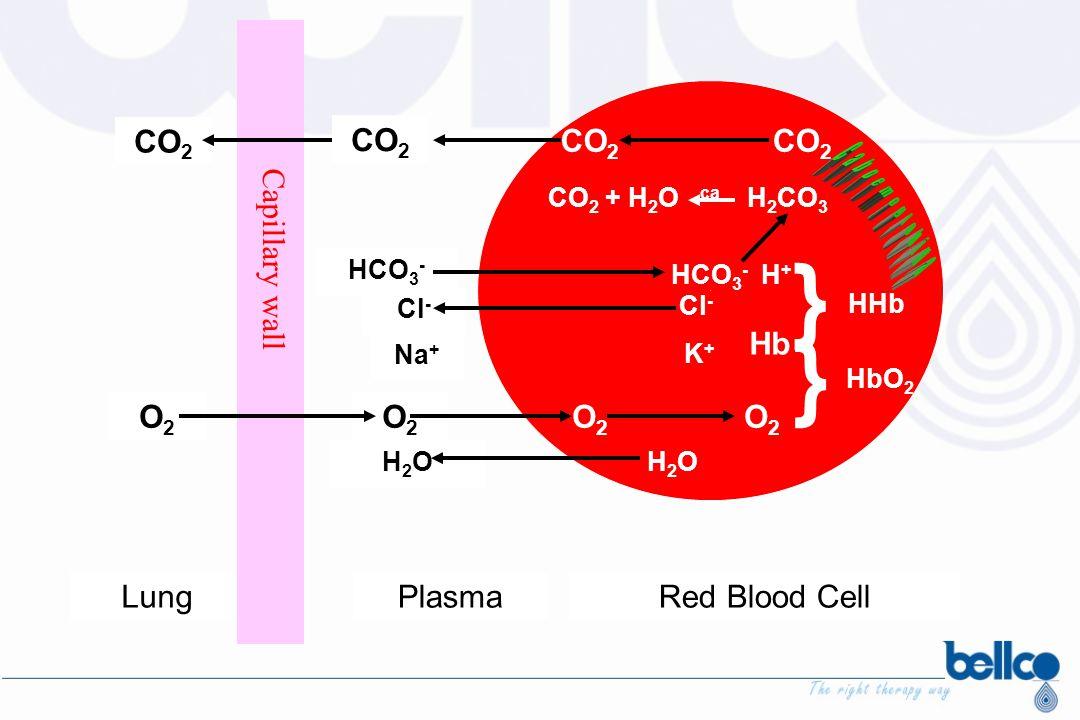 LungPlasmaRed Blood Cell Capillary wall CO 2 O2O2 O2O2 HCO 3 - Cl - Na + H2OH2O CO 2 CO 2 + H 2 O ca H 2 CO 3 HCO 3 - H + K+K+ H2OH2O O2O2 } Hb } HHb