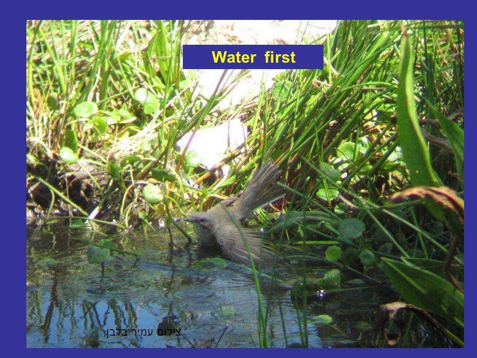 צילום עמיר בלבן Water first
