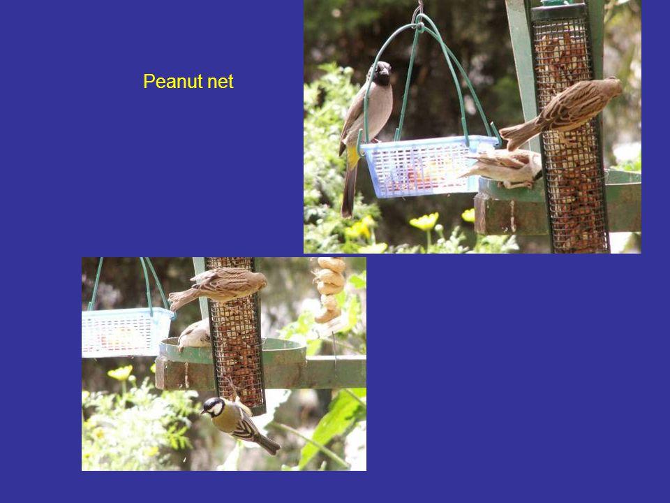 Peanut net