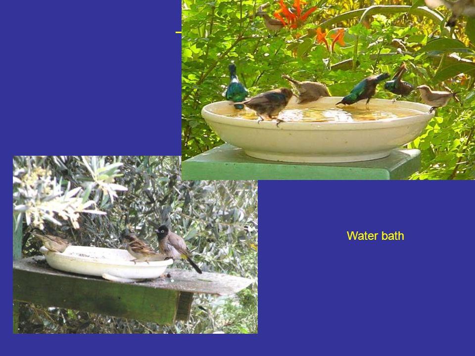 מתקן שתייה ורחצה פשוט – צלחת וטפטפת! Water bath
