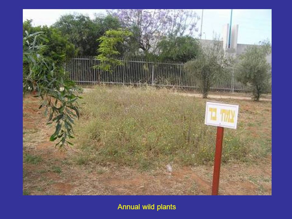 Annual wild plants