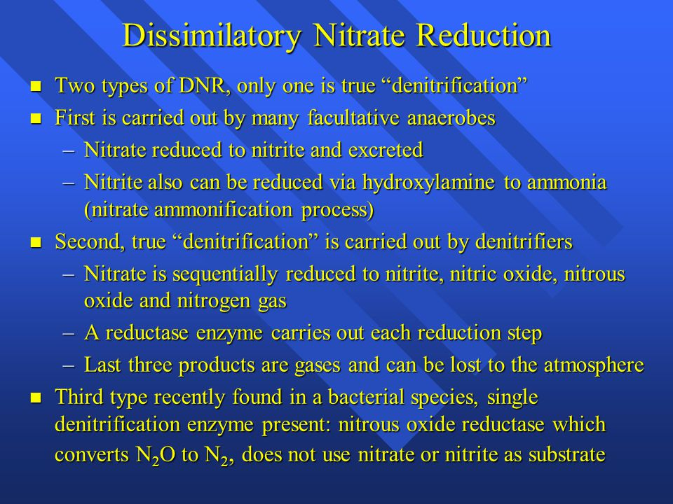 Dissimilatory Nitrate Reduction Two types of DNR, only one is true denitrification Two types of DNR, only one is true denitrification First is carried out by many facultative anaerobes First is carried out by many facultative anaerobes –Nitrate reduced to nitrite and excreted –Nitrite also can be reduced via hydroxylamine to ammonia (nitrate ammonification process) Second, true denitrification is carried out by denitrifiers Second, true denitrification is carried out by denitrifiers –Nitrate is sequentially reduced to nitrite, nitric oxide, nitrous oxide and nitrogen gas –A reductase enzyme carries out each reduction step –Last three products are gases and can be lost to the atmosphere Third type recently found in a bacterial species, single denitrification enzyme present: nitrous oxide reductase which converts N 2 O to N 2, does not use nitrate or nitrite as substrate Third type recently found in a bacterial species, single denitrification enzyme present: nitrous oxide reductase which converts N 2 O to N 2, does not use nitrate or nitrite as substrate