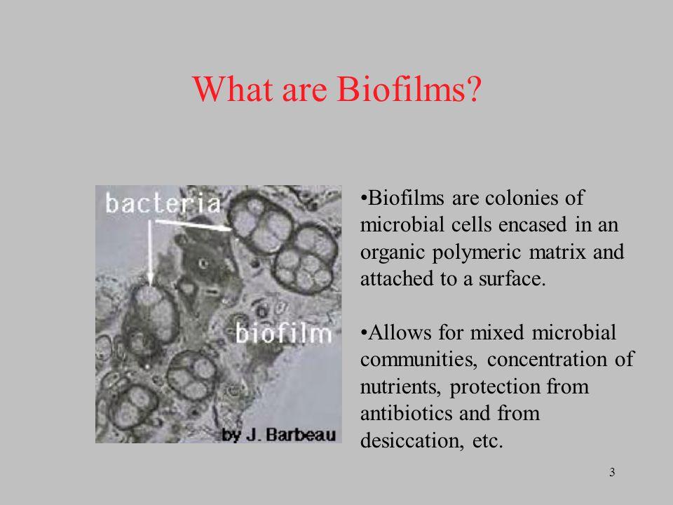 4 Microelectrode Approaching Biofilm