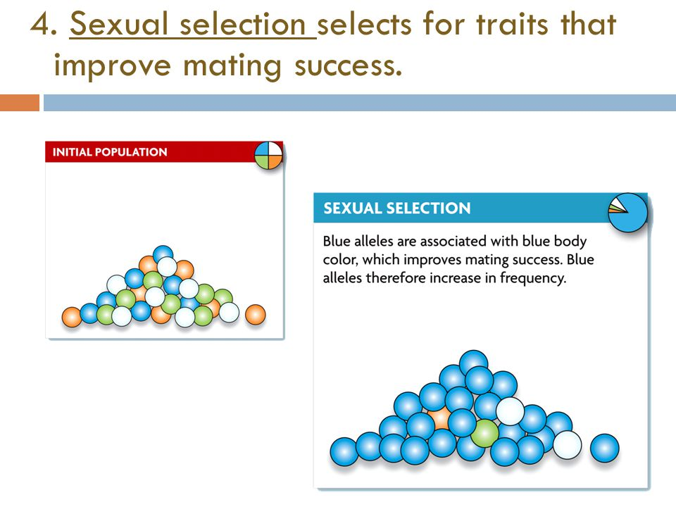 4. Sexual selection selects for traits that improve mating success.